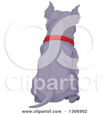 Clipart of a Rear View of a Sitting Blue or Silver Pitbull Dog Wearing a Red Collar - Royalty Free Vector Illustration by Pushkin