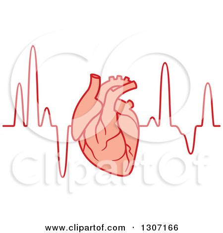 Clipart Of A Human Heart Over An Electrocardiogram Graph Royalty