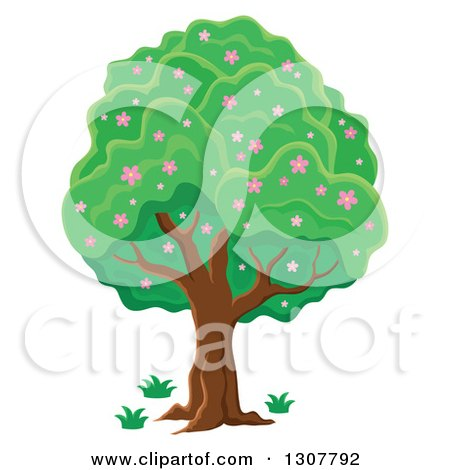 Clipart of a Lush Tree with Pink Spring Blossoms - Royalty Free Vector Illustration by visekart