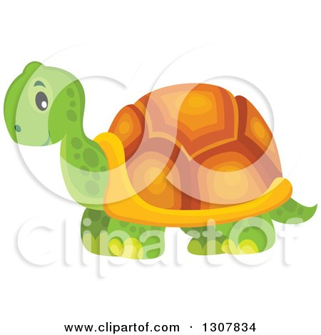Clipart of a Wild African Tortoise - Royalty Free Vector Illustration by visekart