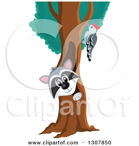 Clipart of a Happy Raccoon Peeking out Through a Tree Hollow, and Woodpecker - Royalty Free Vector Illustration by visekart