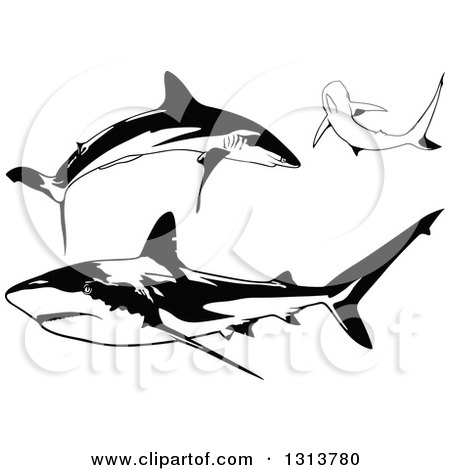 Clipart of Black and White Swimming Caribbean Sharks - Royalty Free Vector Illustration by dero