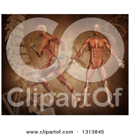 Clipart of 3d Medical Anatomical Men with Visible Muscles, Standing and Running over a Vintage DNA Background - Royalty Free Illustration by KJ Pargeter