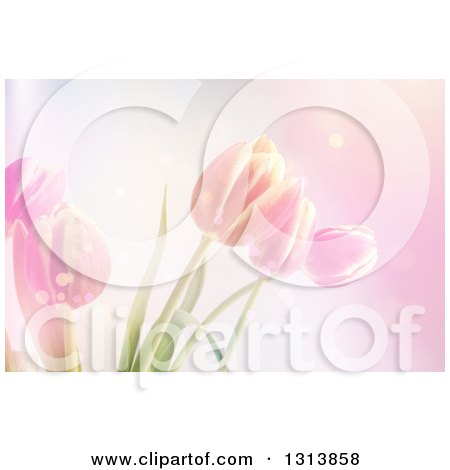 Clipart of a Background of Pink Tulip Flowers and Flares - Royalty Free Illustration by KJ Pargeter
