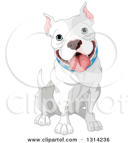 Clipart of a Cute Happy Gray and White Adult Pit Bull Dog Sitting - Royalty Free Vector Illustration by Pushkin