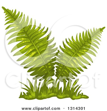 Clip Art Fern Clipart royalty free rf fern clipart illustrations vector graphics 1 preview clipart