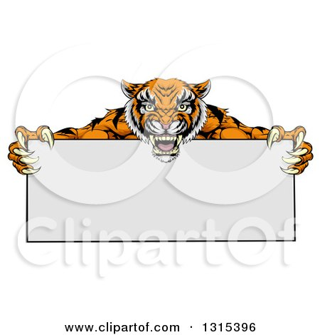 Clipart of a Cartoon Aggressive Tiger Sports Mascot Holding a Blank Wide Sign - Royalty Free Vector Illustration by AtStockIllustration
