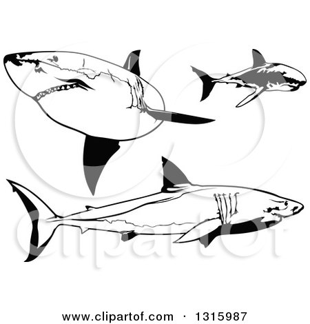 Clipart of Black and White Swimming Great White Sharks - Royalty Free Vector Illustration by dero