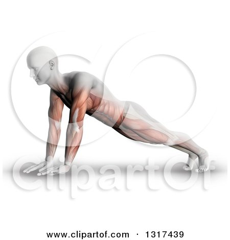 Clipart of a 3d Anatomical Man in a Push up or Yoga Pose, with Visible Muscle Map, on White - Royalty Free Illustration by KJ Pargeter