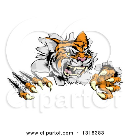 Clipart of a Snarling Tiger Mascot Slashing Through a Wall - Royalty Free Vector Illustration by AtStockIllustration