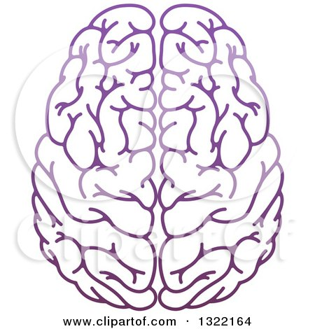 Clipart of a Purple Human Brain - Royalty Free Vector Illustration by AtStockIllustration