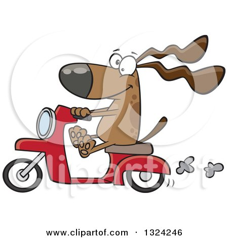 Clipart of a Cartoon Happy Brown Dog Riding a Scooter - Royalty Free Vector Illustration by toonaday