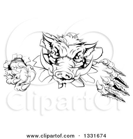 Clipart of a Black and White Aggressive Clawed Boar Mascot Slashing Through a Wall - Royalty Free Vector Illustration by AtStockIllustration