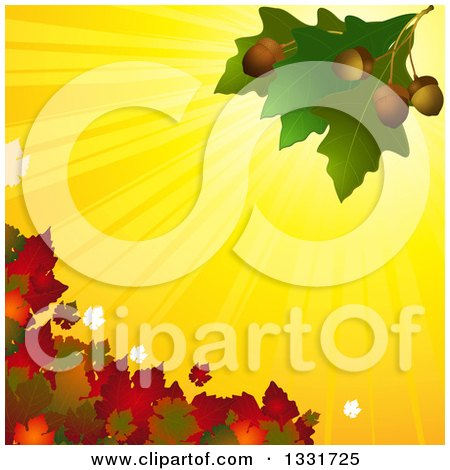 Clipart of 3d Green Oak Leaves with Acorns over Yellow Sun Rays and Autumn Foliage - Royalty Free Vector Illustration by elaineitalia