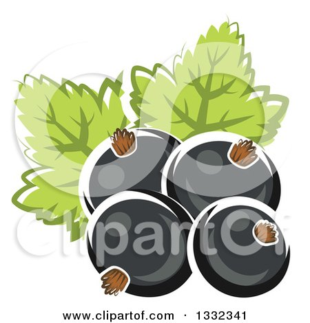 Clipart of Cartoon Black Currant Berries and Leaves - Royalty Free Vector Illustration by Vector Tradition SM