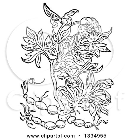 Clipart of a Black and White Woodcut Herbal Peony Plant - Royalty Free Vector Illustration by Picsburg