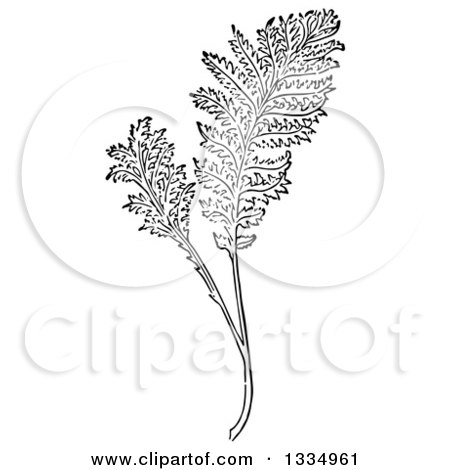 Clipart of a Black and White Woodcut Herbal Tansy Plant - Royalty Free Vector Illustration by Picsburg