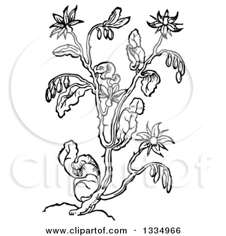 Clipart of a Black and White Woodcut Herbal Borage Plant - Royalty Free Vector Illustration by Picsburg