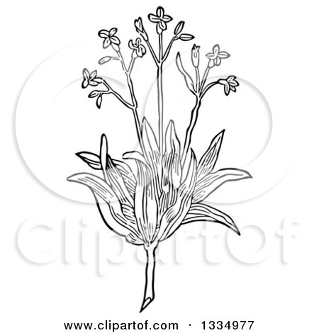 Clipart of a Black and White Woodcut Herbal Agrimony Plant - Royalty Free Vector Illustration by Picsburg