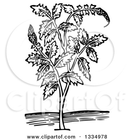 Clipart of a Black and White Woodcut Herbal Medicinal Agrimony Plant - Royalty Free Vector Illustration by Picsburg