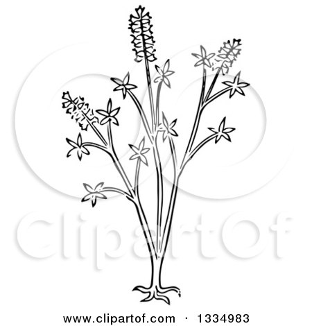 Clipart of a Black and White Woodcut Herbal Medicinal Chaste Tree Plant - Royalty Free Vector Illustration by Picsburg