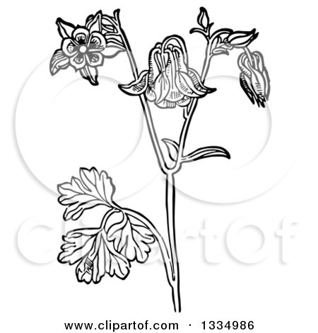 Clipart of a Black and White Woodcut Herbal Medicinal Columbine Plant - Royalty Free Vector Illustration by Picsburg