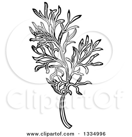 Clipart of a Black and White Woodcut Herbal Medicinal Southernwood Plant - Royalty Free Vector Illustration by Picsburg