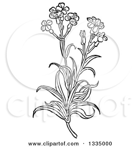 Clipart of a Black and White Woodcut Herbal Medicinal Wallflower Plant - Royalty Free Vector Illustration by Picsburg