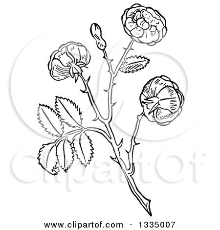 Clipart of a Black and White Woodcut Aromatic Herbal Rose Plant - Royalty Free Vector Illustration by Picsburg