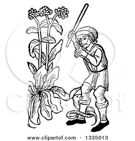 Clipart of a Black and White Woodcut Medieval Man Swinging at a Snake Coiled Around His Leg in a Garden - Royalty Free Vector Illustration by Picsburg