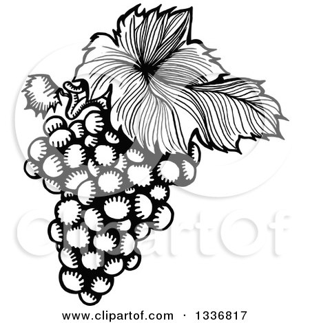 Clipart of a Sketched Black and White Doodle of a Leaf and Bunch of Grapes - Royalty Free Vector Illustration by Prawny