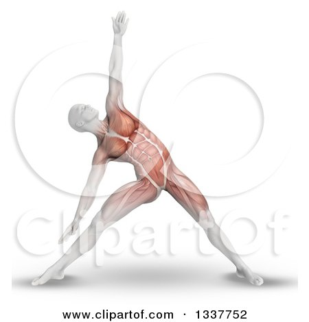 Clipart of a 3d Anatomical Man Stretching in a Yoga Pose, with Visible Muscles, on White - Royalty Free Illustration by KJ Pargeter
