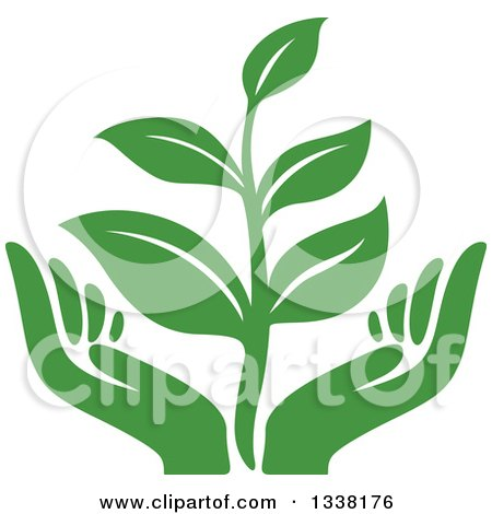 Clipart of a Seedling Plant over Green Hands - Royalty Free Vector Illustration by Vector Tradition SM
