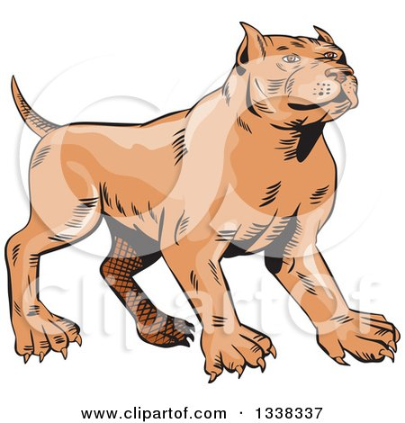 Clipart of a Sketched Brown Pitbull Dog - Royalty Free Vector Illustration by patrimonio