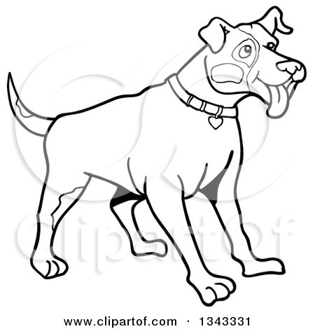 Lineart Clipart of a Cartoon Black and White Pitbull Dog with Patches on His Face, Standing and Panting, Facing Right - Royalty Free Outline Vector Illustration by LaffToon