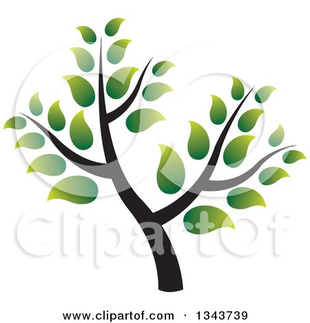 Clipart Of A Green Tree With Gradient Leaves Royalty Free Vector Illustration