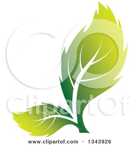 Clipart of Two Green Leaves - Royalty Free Vector Illustration by ColorMagic