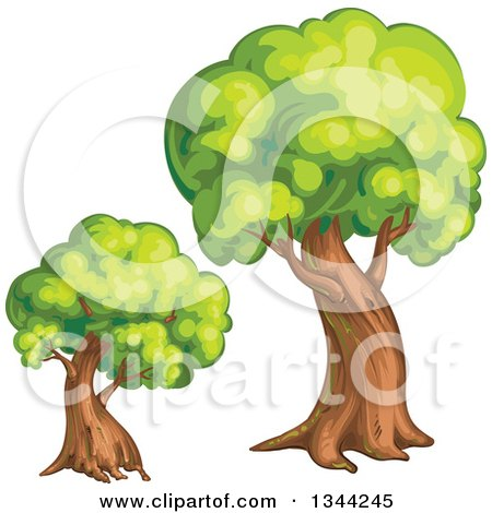 Clipart of Mature Trees - Royalty Free Vector Illustration by merlinul