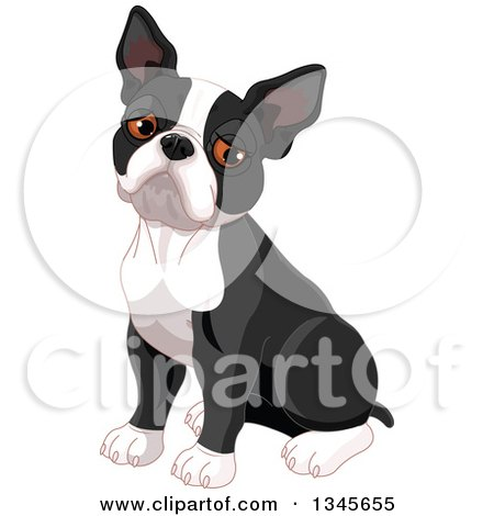 Clipart of a Cute Boston Terrier Dog Sitting and Pouting - Royalty Free Vector Illustration by Pushkin