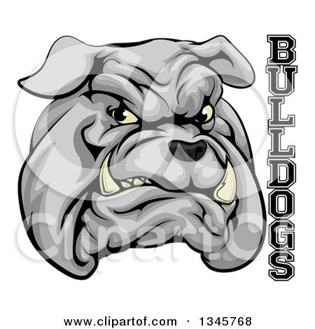 Clipart of a Growling Gray Aggressive Bulldog Mascot Face with Text - Royalty Free Vector Illustration by AtStockIllustration