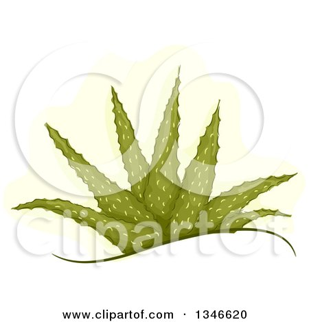 Clipart of a Mature Aloe Vera Plant - Royalty Free Vector Illustration by BNP Design Studio