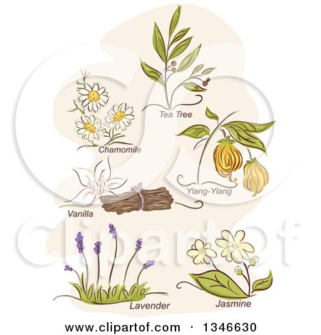 Clipart of Sketched Herbal Plants and Titles - Royalty Free Vector Illustration by BNP Design Studio
