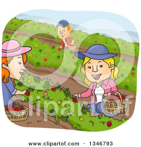 Clipart of a Cartoon Caucasian Man and Women Picking Strawberries - Royalty Free Vector Illustration by BNP Design Studio