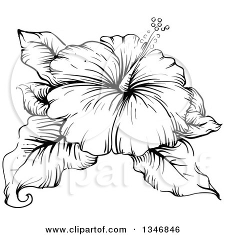 Clipart of a Black and White Engraved Hibiscus Flower and Leaves - Royalty Free Vector Illustration by BNP Design Studio