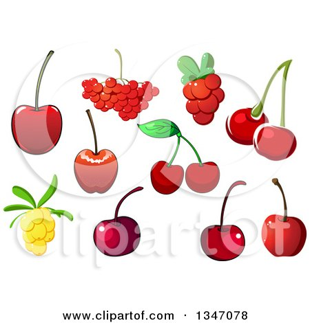 Clipart of Cherries, Cranberries and Yellow Berries - Royalty Free Vector Illustration by Vector Tradition SM