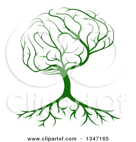 Clipart of a Green Brain Canopied Tree with Roots - Royalty Free Vector Illustration by AtStockIllustration