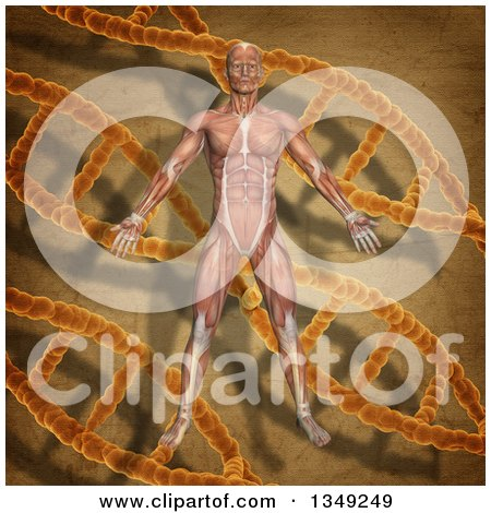 Clipart of a 3d Medical Anatomical Male with Visible Muscles over a Vintage DNA and Background - Royalty Free Illustration by KJ Pargeter