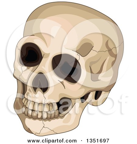 Clipart of a Cracked Human Skull - Royalty Free Vector Illustration by Pushkin