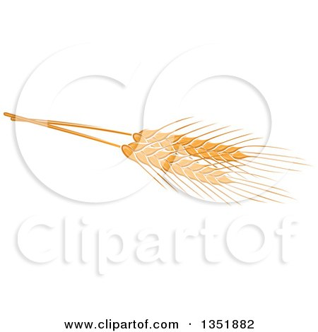 Clipart of Golden Wheat - Royalty Free Vector Illustration by Vector Tradition SM