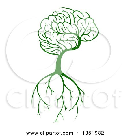 Clipart Of A Green Knowledge Brain Canopied Tree With Roots Royalty Free Vector Illustration
